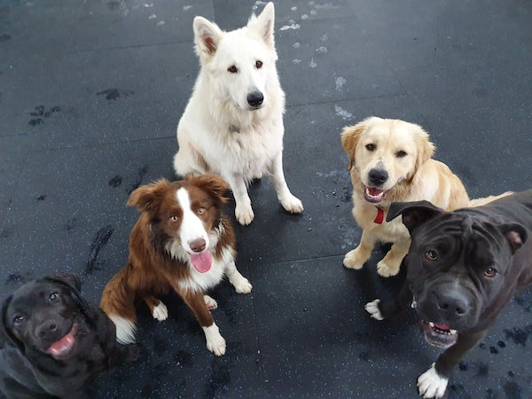 choosing a doggy daycare does your dog enjoy company