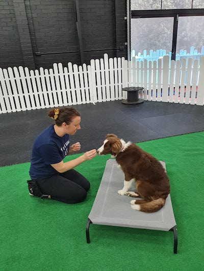 staff training at dog day cares wollongong
