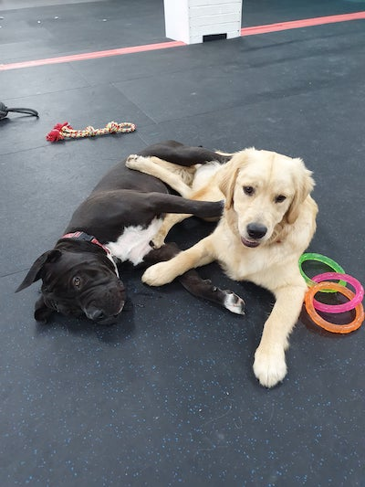 happy dogs at dog day care wollongong