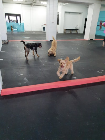 socialising at doggy day care wollongong