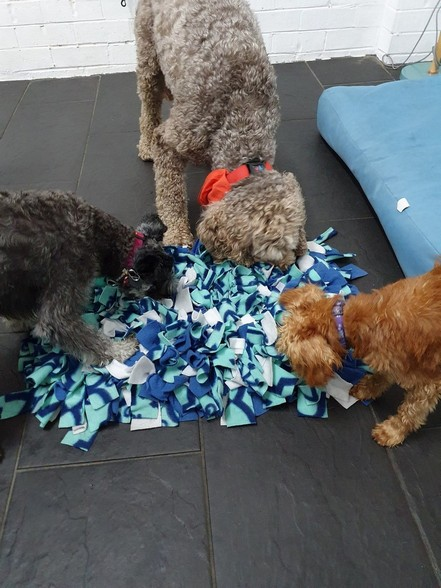 sniff out the treats with snuffle mats