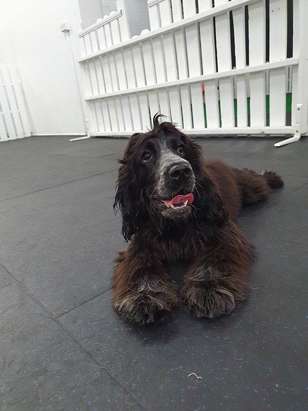 before dog grooming photo