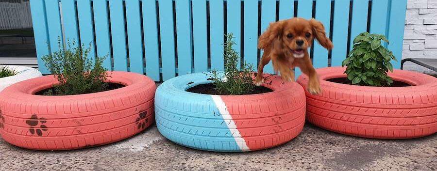 Cavalier jumping over scent garden