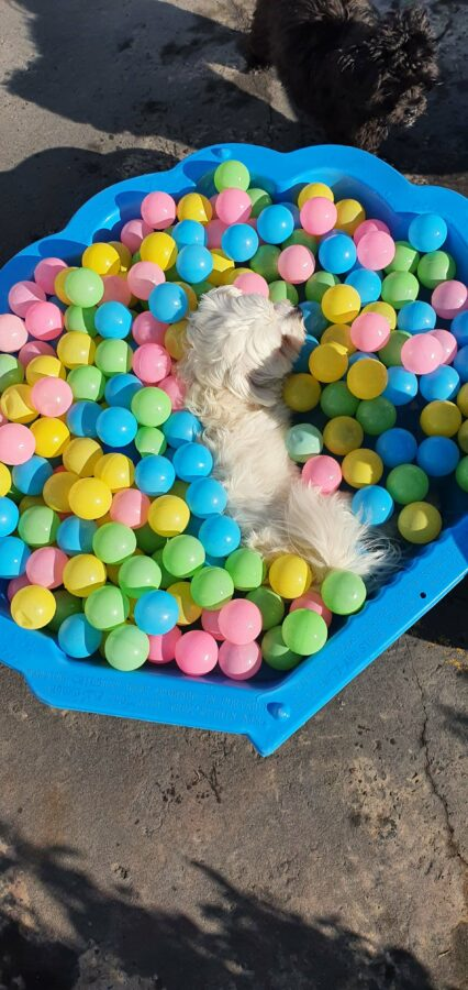 Dog in ball pit