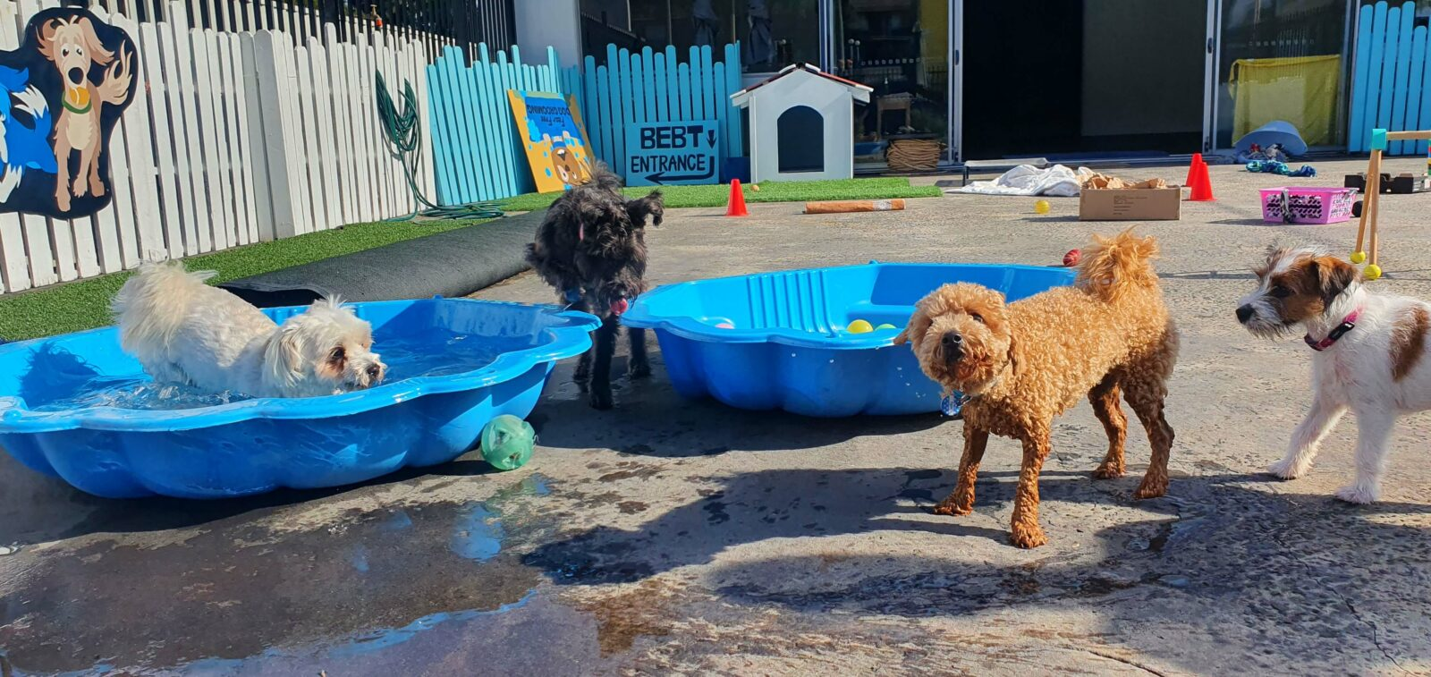 Dogs in and around pool