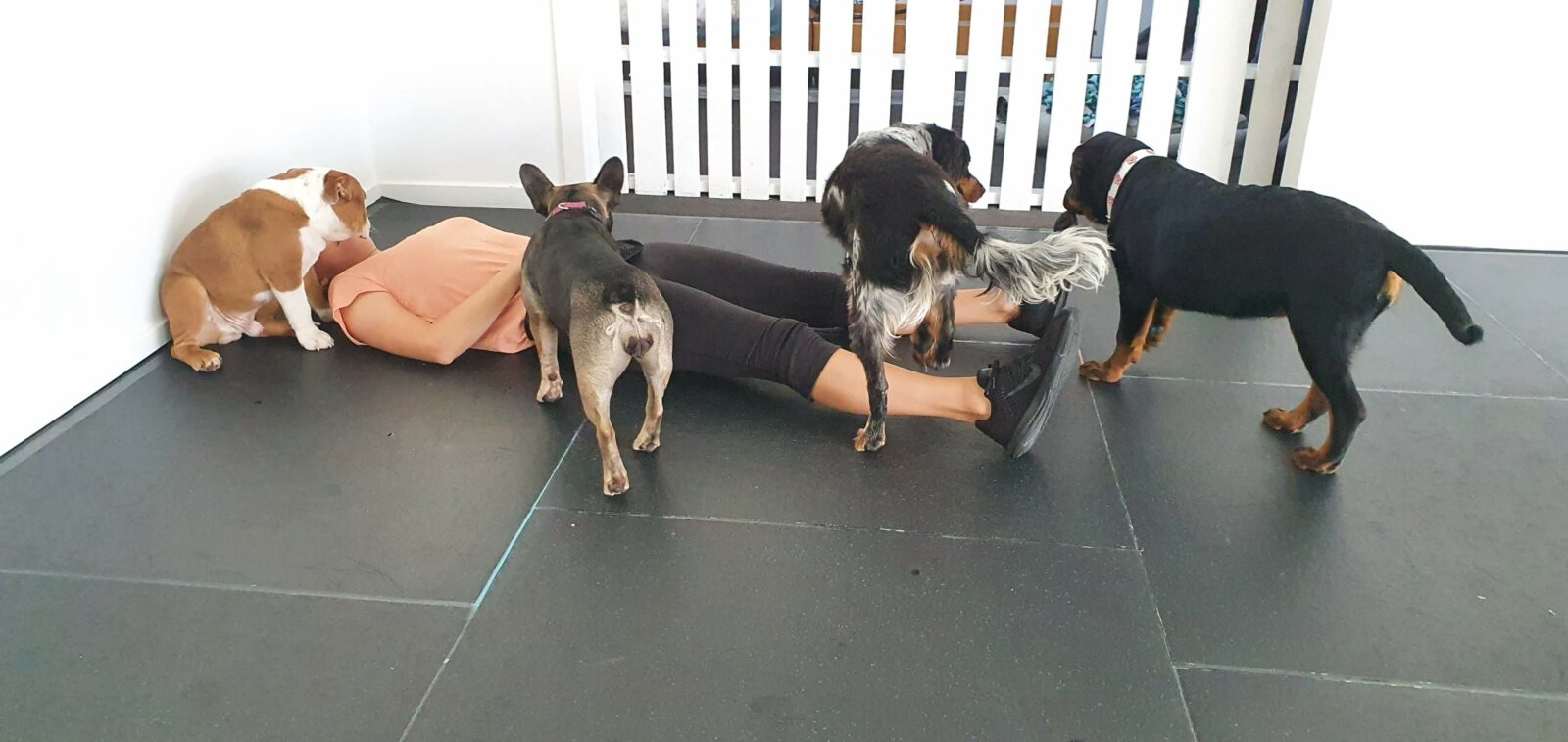 Human on floor with dogs on top